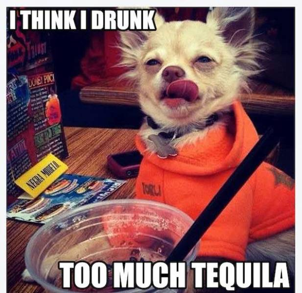 Need Some Salt With These Tequila Memes?