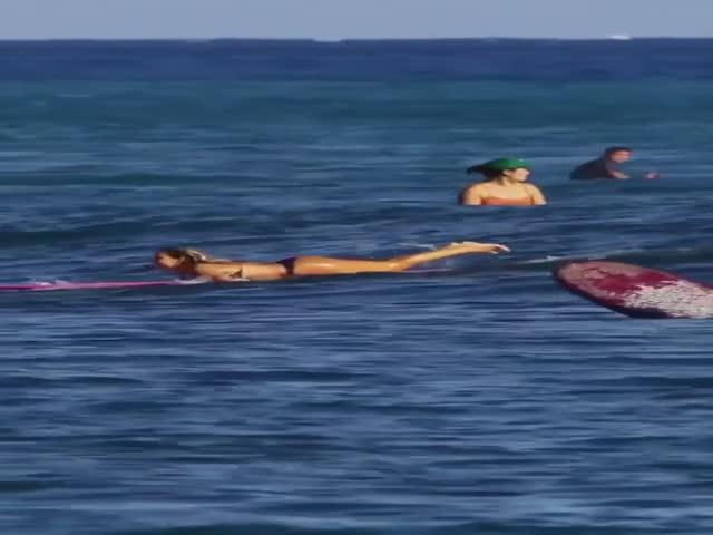 Elegant Surfing