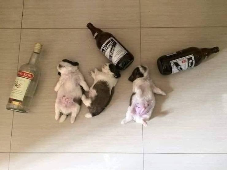 They Are 100% Drunk!