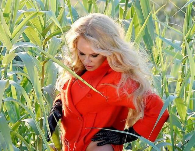 Pamela Anderson Shows She's Still Hot!