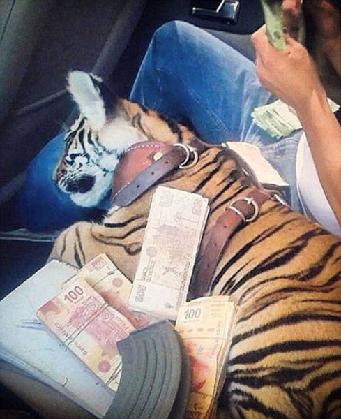 Mexican Drug Cartels Let Their Kids Live Very Rich Lives