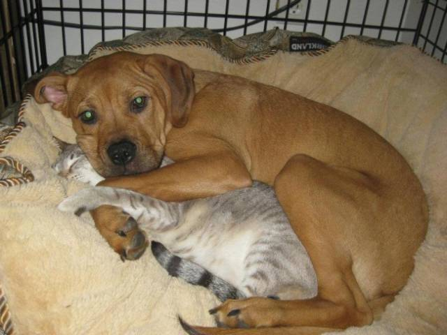 Cats And Dogs Together Are An Explosive Mix