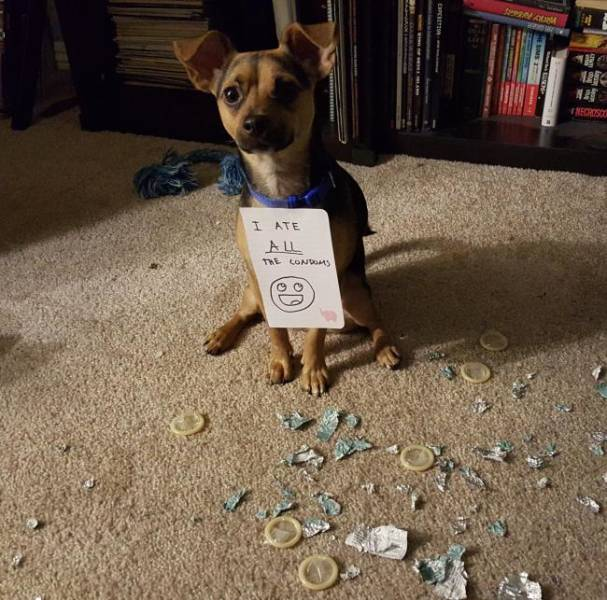 These Pets Are Trueborn Criminals