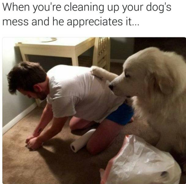 These Dog Memes Are Too Woofunny!