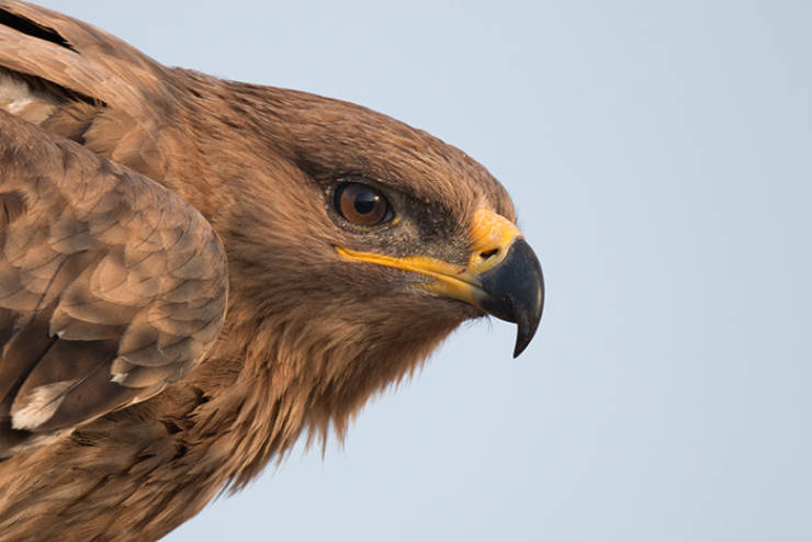 Dead Eagle's GPS Tracking Shows His Travels Over A Period Of A Year