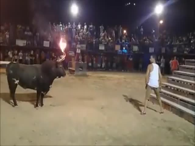Yeah, This Bull Looks Totally Harmless…