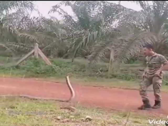How To Catch A Snake (Don't Try This At Home)