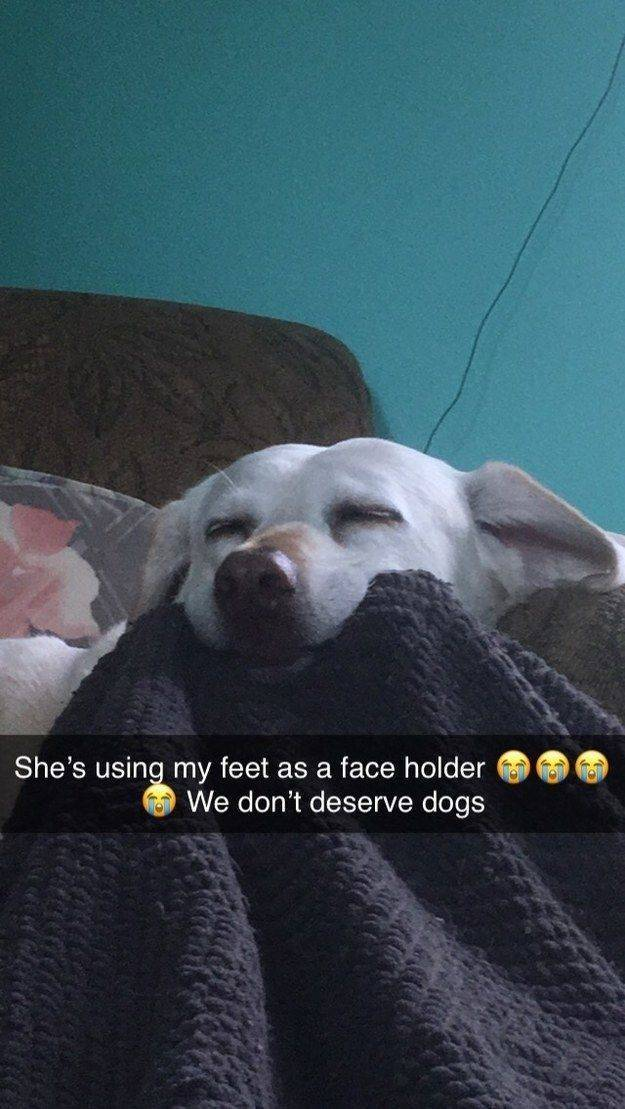 Animals Just Can't Stop Being Funny