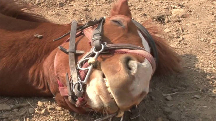 Meet Jingang, Probably The Most Dramatic Horse In The World