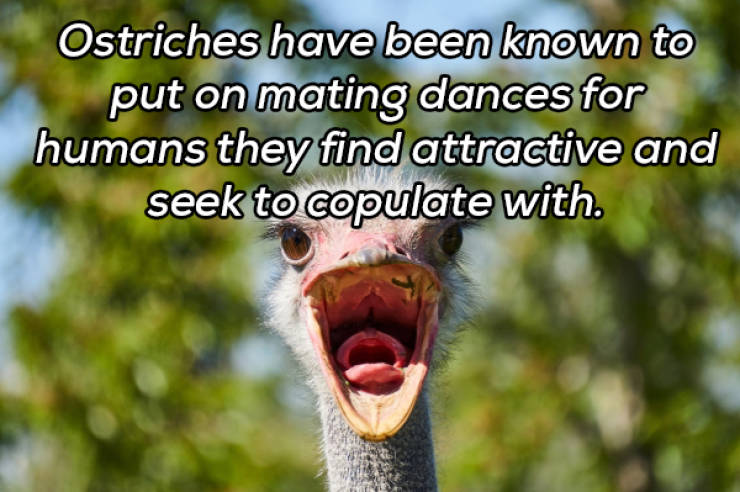 It's Always Time For NSFW Facts!