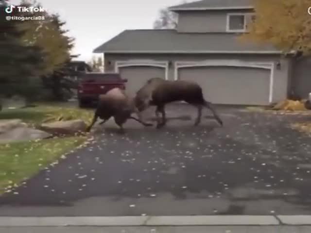 Brutal Canadian Violence…