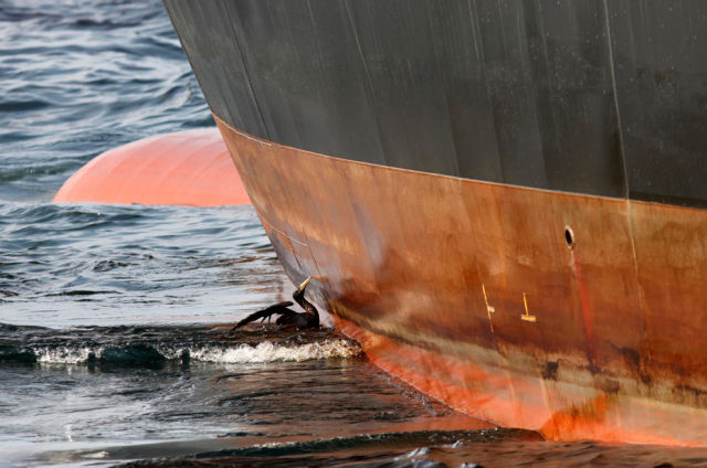 The BP Oil Leak Disaster: Animals Are the First Victims! (26 pics)