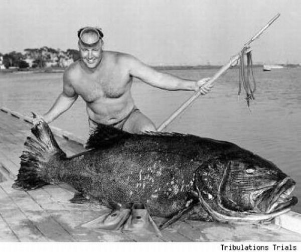 Fisherman's Dream (31 pics)