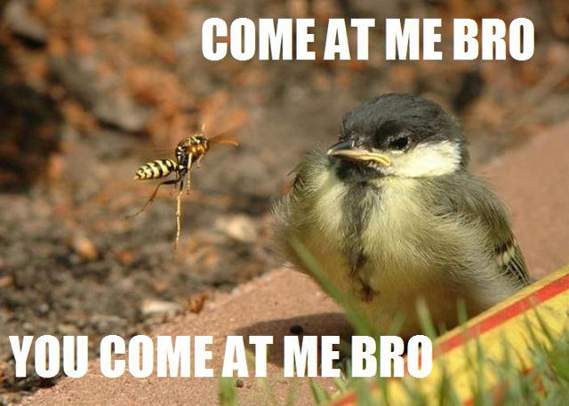 """The Most Hilarious """"Come at Me, Bro!"""" Memes"""
