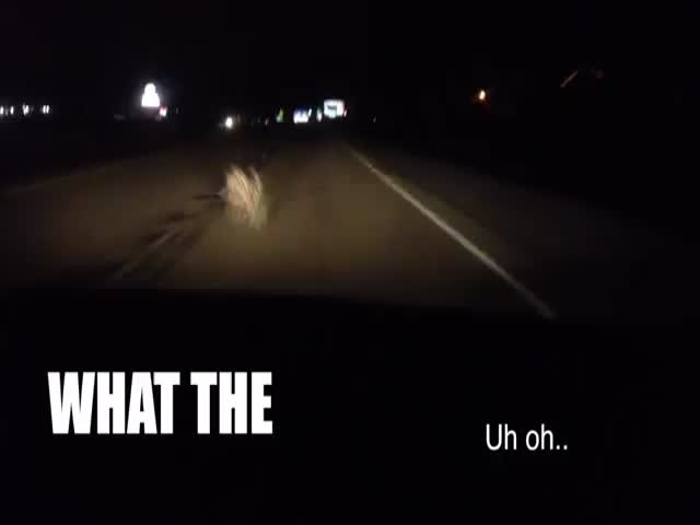Girl Freaks Out While Driving through Tumbleweeds at Night  (VIDEO)