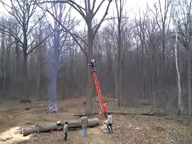 Cutting Tree Goes Wrong  (VIDEO)
