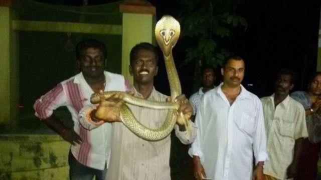 The Bravest Snake Expert on the Planet