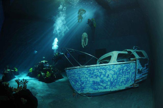 Stuff Just Looks So Much Scarier Underwater