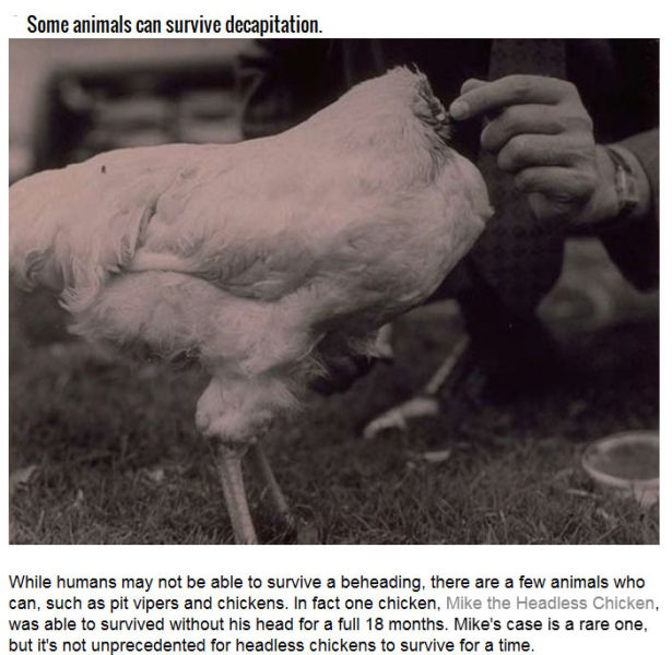The Factual and Scientific History of Decapitation