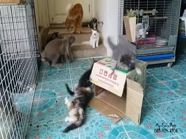 Rabbit Tries to Get Some with a Cat  (VIDEO)