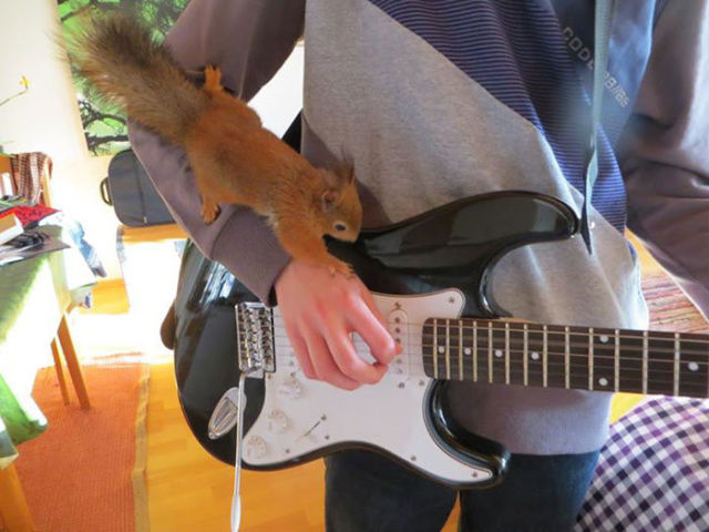 A Rescued Squirrel Becomes a Sweet House Pet