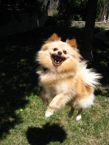 Examples of Excitement Overload