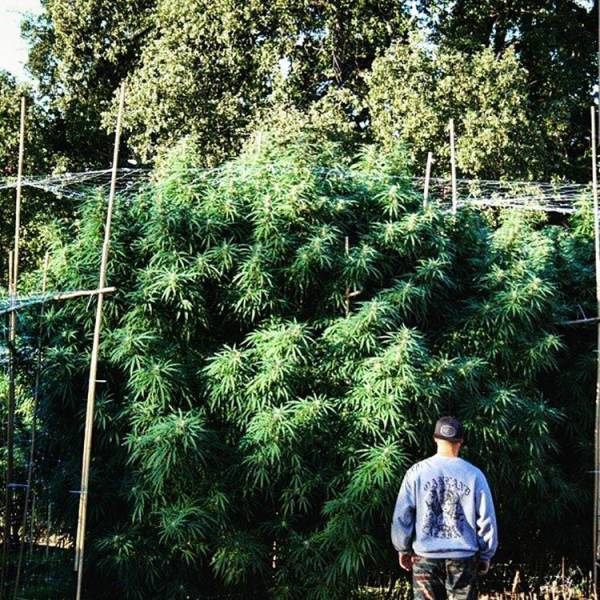 This Marijuana Businessman Is the Next King of Instagram