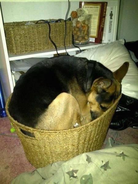 Dogs Can Sleep Anywhere and Everywhere