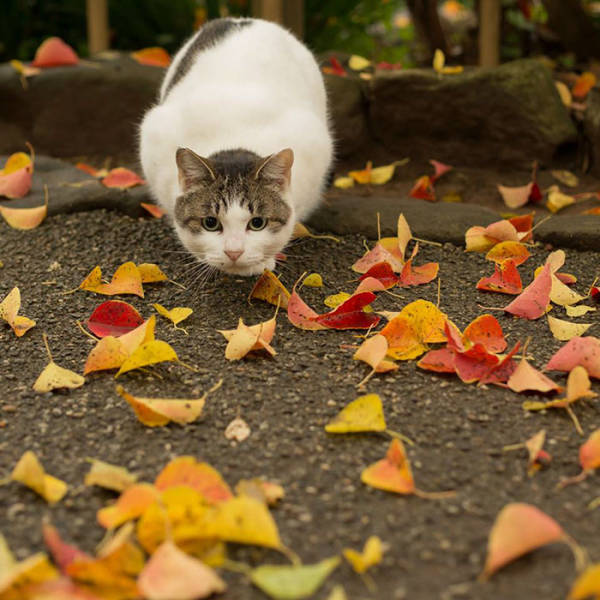 Cute Stray Cats Of Tokyo