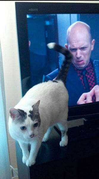 There's Nothing Better Than Perfectly Timed Photos