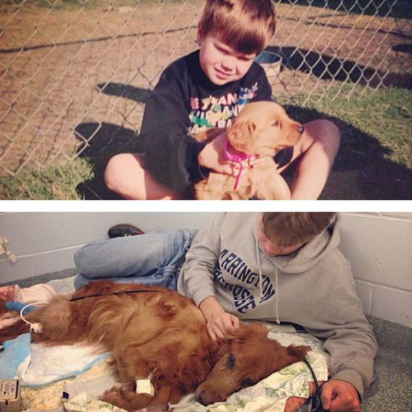 These First And Last Pics Of Pets Will Wanna Make You Cry